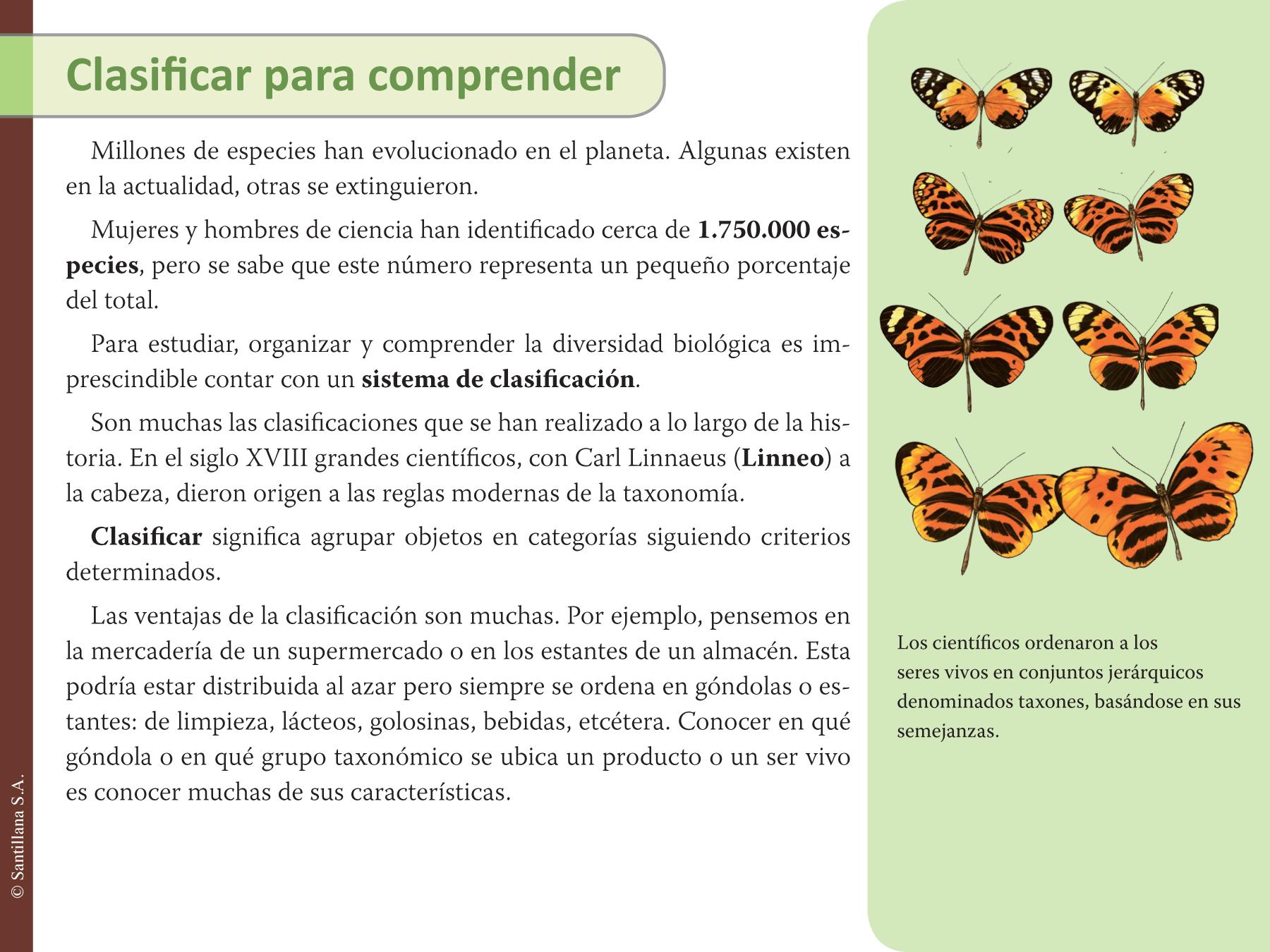 E lecciones santillana for Taxonomia de la jirafa
